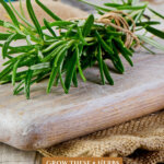Pinterest pin for using kitchen herbs medicinally. Image of a cluster of rosemary sprigs.