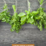Pinterest pin for using kitchen herbs medicinally. Image of a different herbs tied with twine drying upside down.