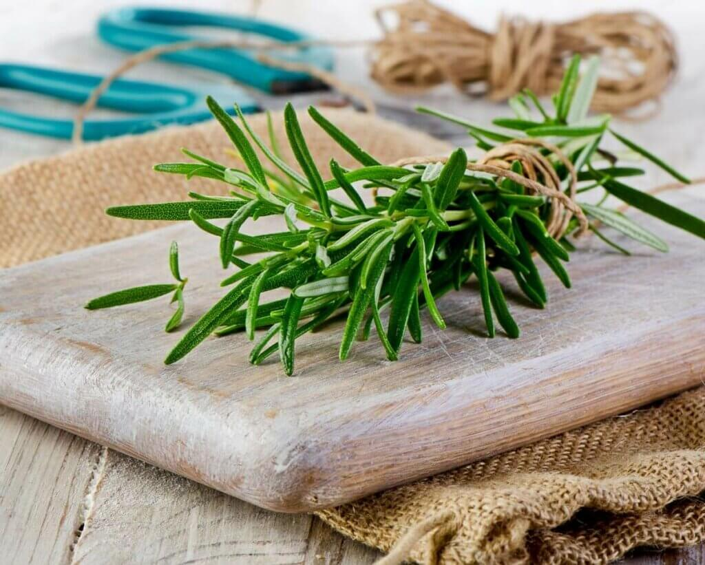 A bundle of rosemary tied with twine.